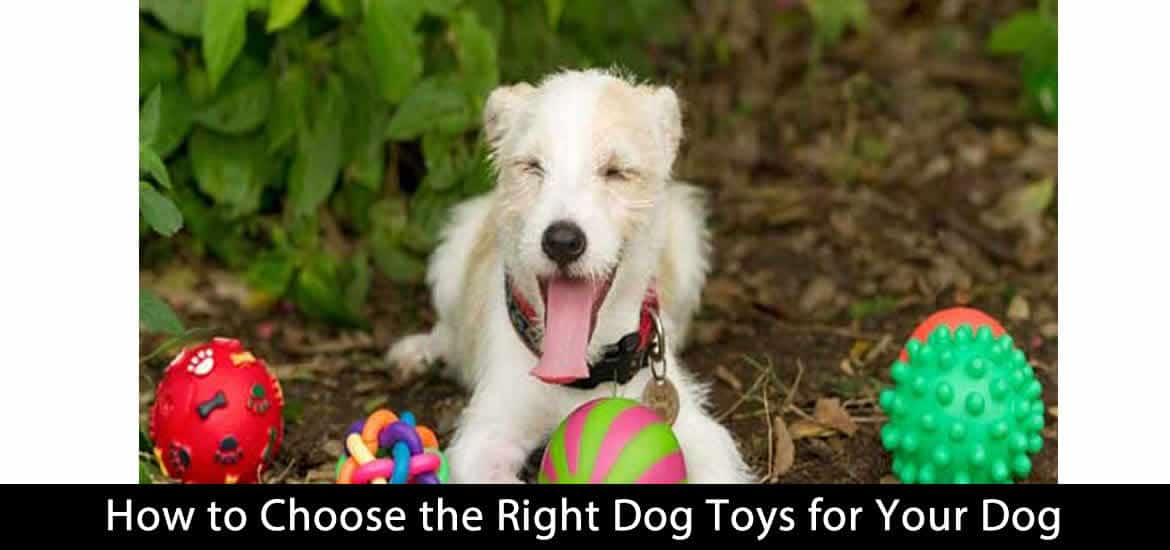 How to Choose the Right Dog Toys