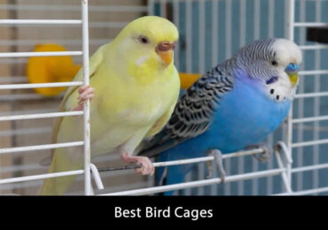 The Best Bird Cage To Buy For 2021 – Guide and Reviews