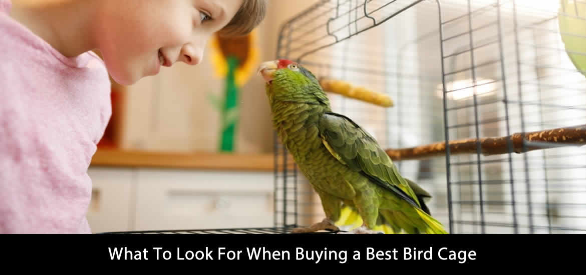 Best Bird Cage Buying Guide