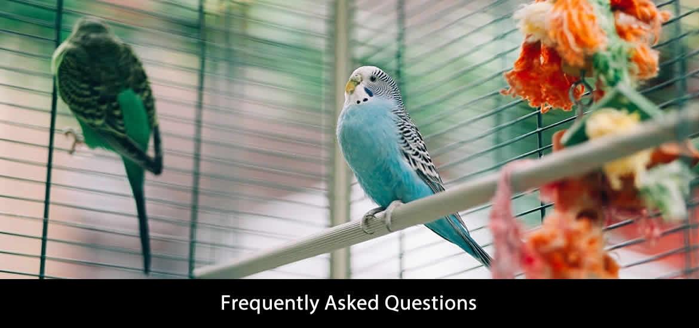 Best Bird Cage FAQs