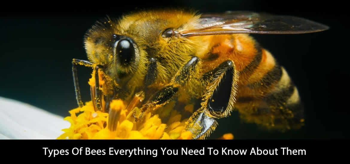 Types Of Bees Everything You Need To Know About Them